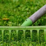 Dethatching rake on a lawn